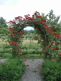 Rose garden trellis
