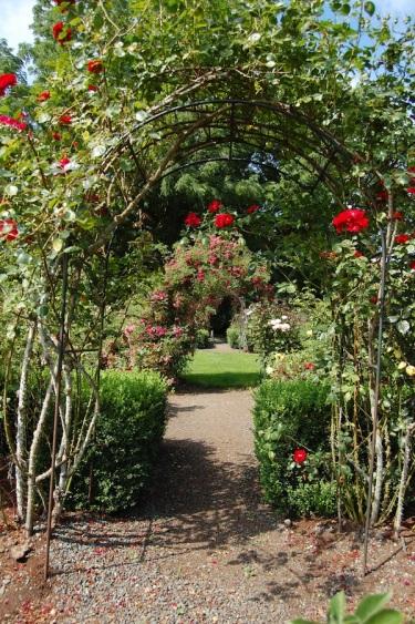 Rose garden vista