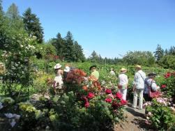 Jane Austen Tea tour through rose garden